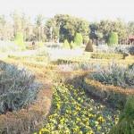 ローズマリー公園の庭